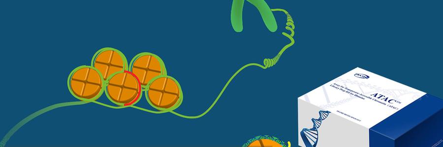 Lab Research and Development Technician profile banner profile banner