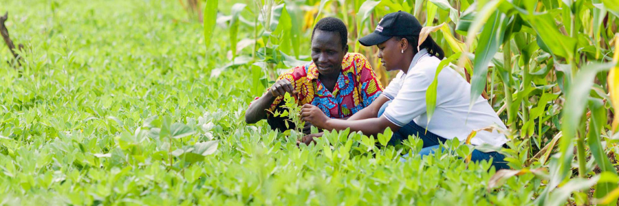 Zambia Food Processing Internship profile banner profile banner