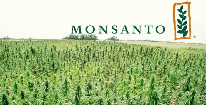 Monsanto profile banner