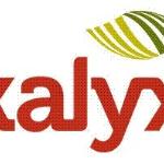 Kalyx Australia logo